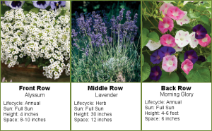Flower Garden – 4 foot Garden in a 4 inch Pot
