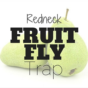 Redneck Fruit Fly Trap
