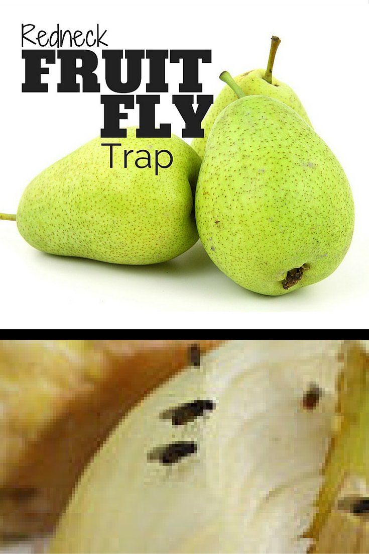 There is a faster way to get rid of fruit flies then waiting around for them to crawl into some small holes that you've pierced into some plastic wrap.