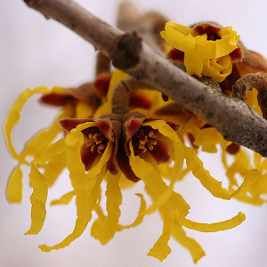 10 Surprising Uses for Witch Hazel Frugal Living