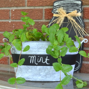 DIY Weathered Galvanize Blackboard Planter