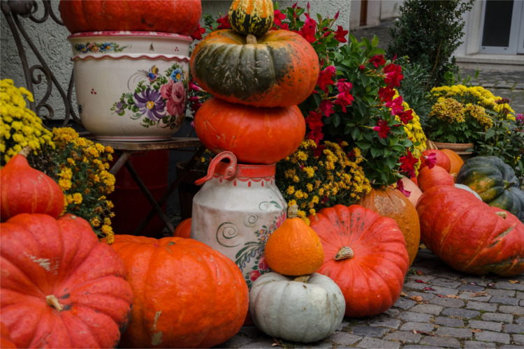 How To Choose the Perfect Pumpkin - Knowing what pumpkin you should use for cooking, baking, painting, carving and decorating will make the season a lot more enjoyable.