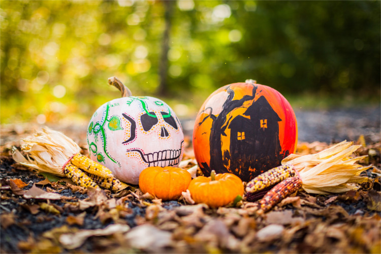 How To Choose the Perfect Pumpkin - Knowing what pumpkin you should use for cooking, baking, painting, carving and decoratingwill make the season a lot more enjoyable.